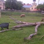 Botkyrka-20120707-02018
